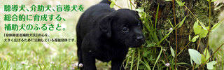 topimage0.jpg